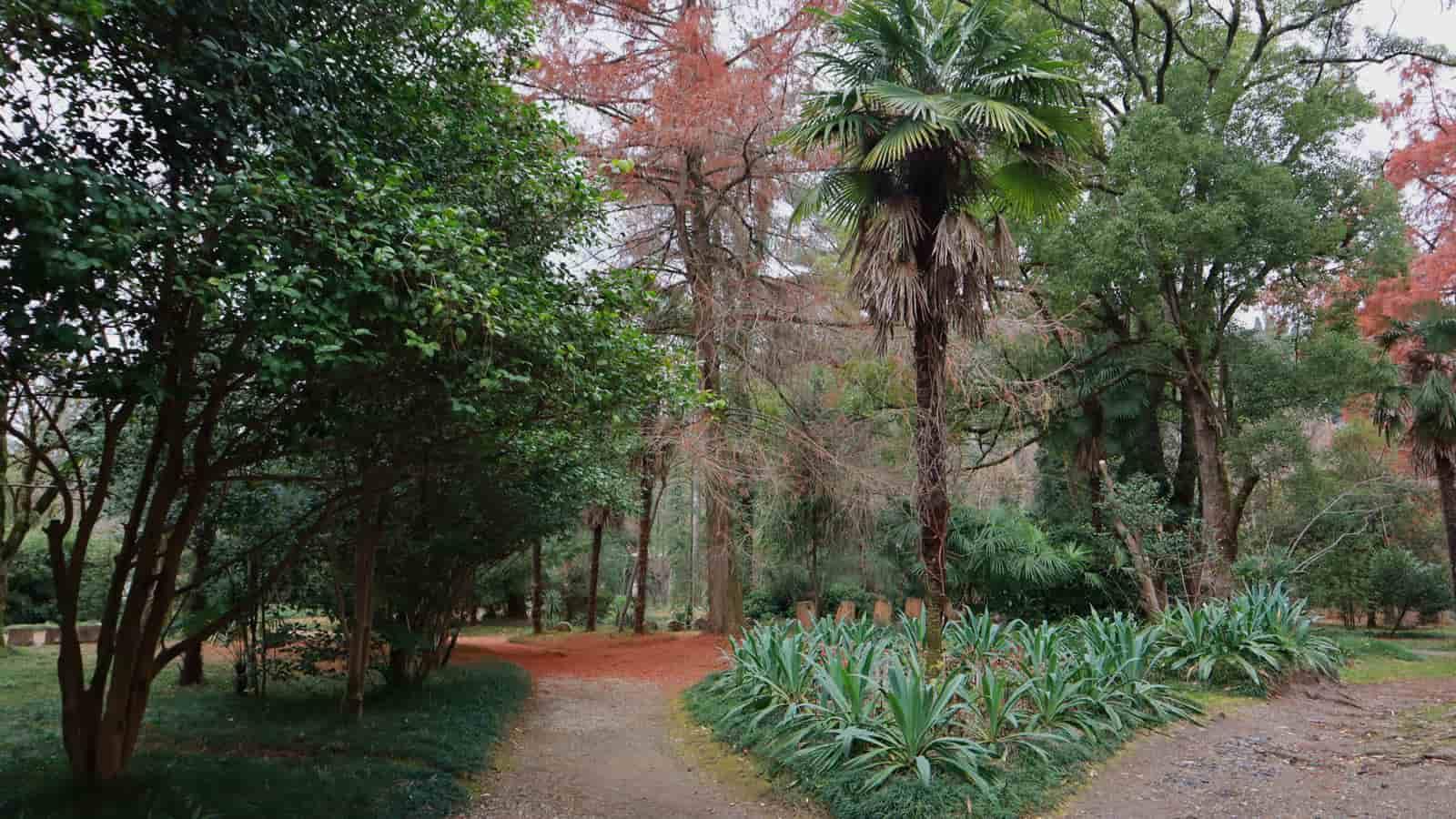 abhaziya-botanicheskiy-sad (2)