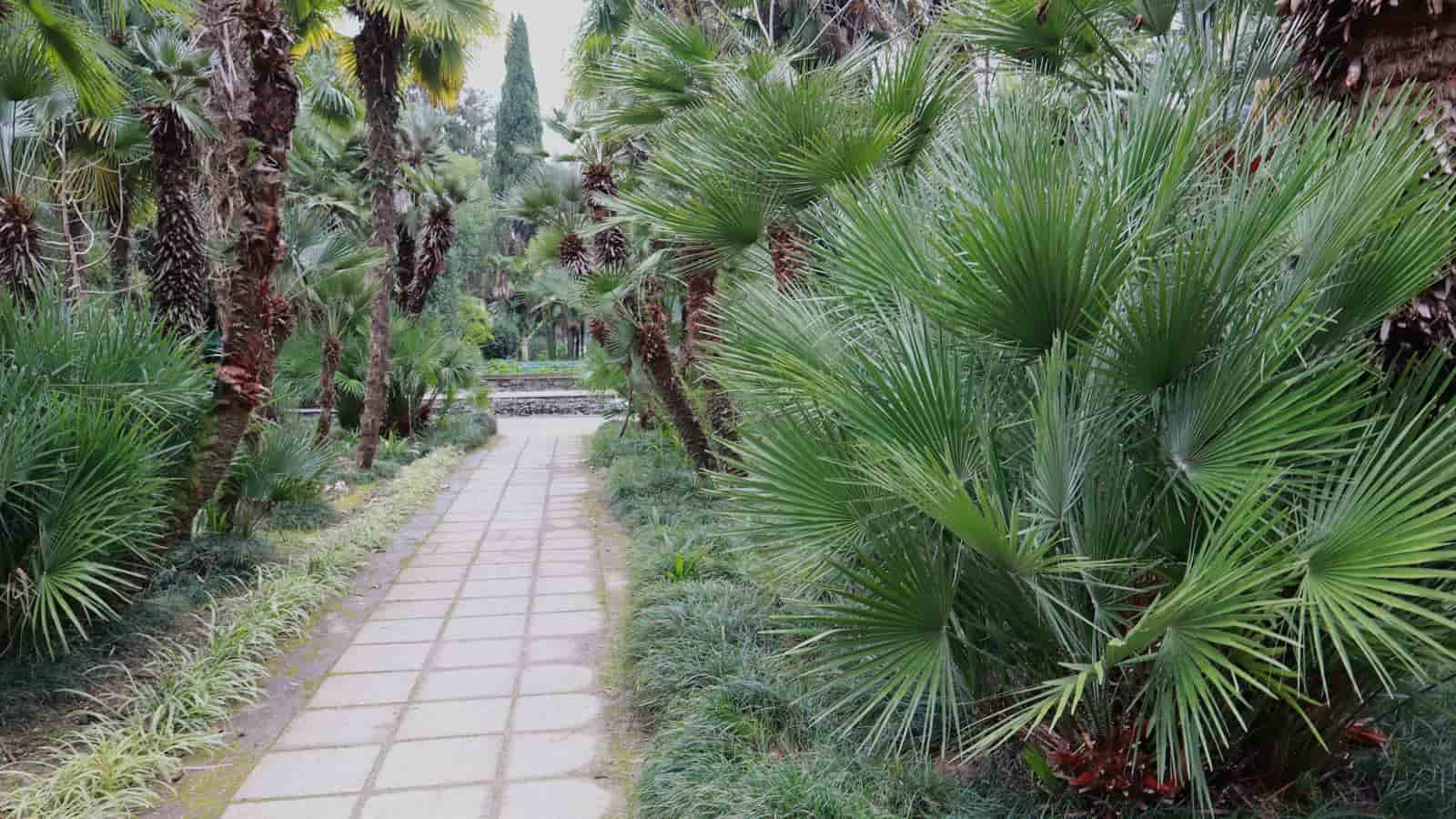 abhaziya-botanicheskiy-sad (7)