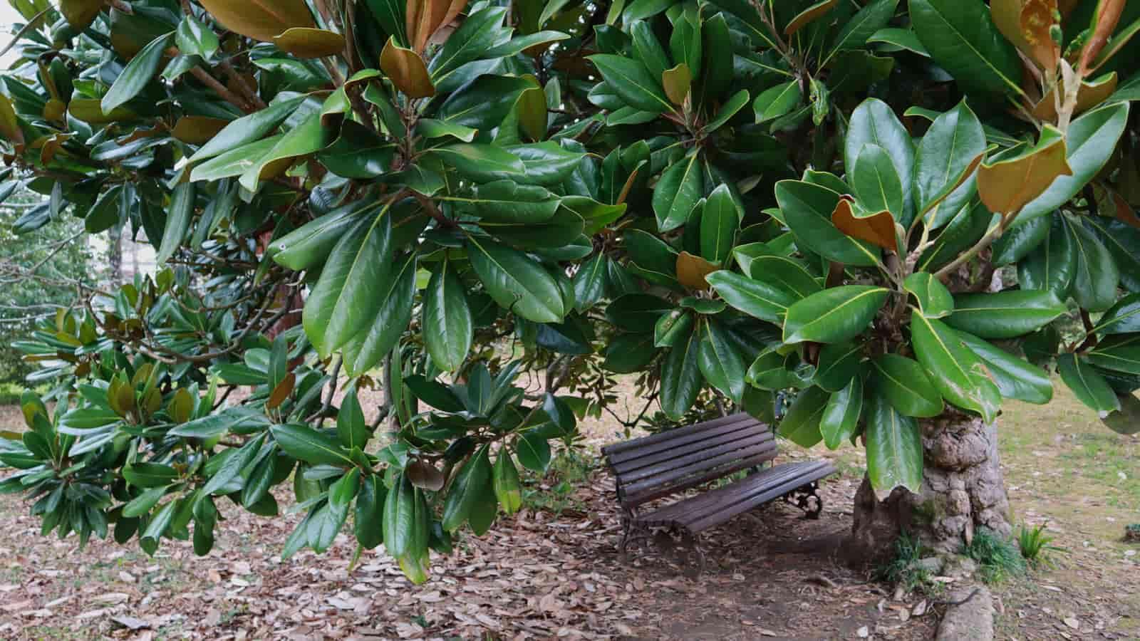abhaziya-botanicheskiy-sad (9)
